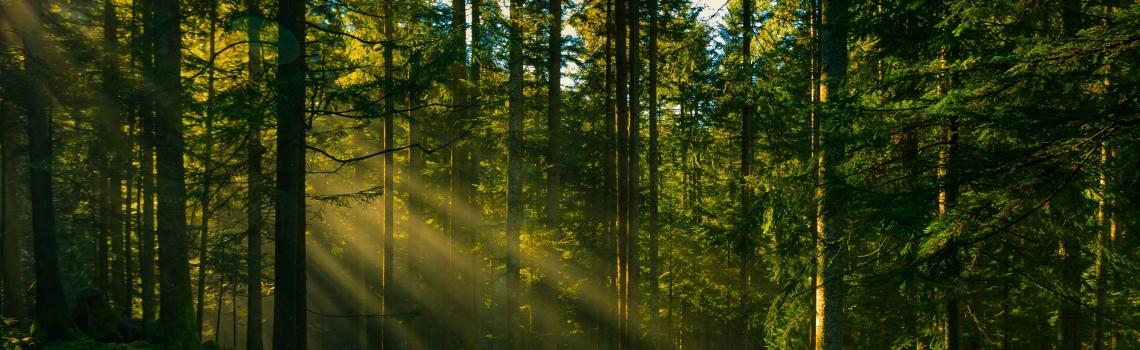 Šumarstvo i obrada drveta